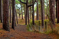 Colours (MarkXray) Tags: epl1 formby merseyside woods