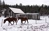 'Frosty Stallions' (JEMiguel007) Tags: stallions horses barn he is risen jesus christ landscape snow winter blizzard farm california fence trees whiteout