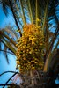 Palme (Burnett0305) Tags: autumn balearicislands balearischeinseln fall herbst majorca mallorca nikonafs24120mmf40vr nikond750 spain spanien espana