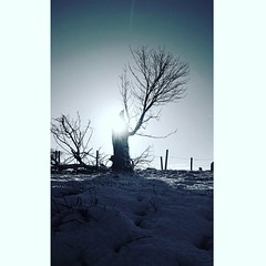 Standing alone in the winter snow (callum.pooler) Tags: sun snow tree sky winter landscape scenery nature uk europe staffordshire moorlands