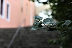 IMG_4108 (Erasmo Marques) Tags: centrovelho chuva reflexo historico