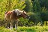 Happy Horse (axel.becker73) Tags: happy horse pferd glücklich wiese meadow sunshine sonnenschein equus equidae
