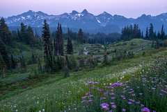Tatoosh hues (Laura Jacobsen) Tags: mtrainier mtrainiernationalpark nationalparks rainier tatooshrange washington wildflowers