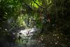IMG_1728 (Aelred85) Tags: canon600d sigma1750mmf28exdcoshsm jungle burma myanmar shanstate mrbike hsipaw