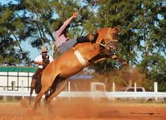 Tiago Fernandes e Cambona da Santa Márcia (Eduardo Amorim) Tags: gaúcho gaúchos gaucho gauchos cavalos caballos horses chevaux cavalli pferde caballo horse cheval cavallo pferd pampa campanha fronteira quaraí riograndedosul brésil brasil sudamérica südamerika suramérica américadosul southamerica amériquedusud americameridionale américadelsur americadelsud cavalo 馬 حصان 马 лошадь ঘোড়া 말 סוס ม้า häst hest hevonen άλογο brazil eduardoamorim gineteada jineteada