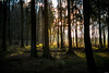 Sunlight in the forest (Rico the noob) Tags: grass 50mmf12 50mm sunrise nature germany outdoor sun 2017 tree rueckersdorf forest published trees dof bokeh d850 landscape