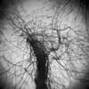 Disremembering Autumn #4 (LowerDarnley) Tags: holga multipleexposures woods tree bare branches ipswichriver topsfield ma