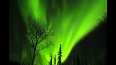 Parade of Green (Katy on the Tundra) Tags: northernlights aurora auroraborealis alaskab