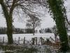 A Lone Tree (Meon Valley Photos.) Tags: a lone tree soberton ncg