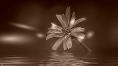 Flowers in sepia (YᗩSᗰIᘉᗴ HᗴᘉS +13 000 000 thx) Tags: 7dwf crazytuesdaytheme flowersinsepia sepia flower monochrome hensyasmine namur belgium wallonie europa aaa بلجيكا belgique namuroise proxi belga info look photo friends bélgica ベルギー белгия բելգիա belgio 벨기에 belgia бельгия 比利时 bel be ngc saariysqualitypictures wow yasminehensinterst intersting interestingness eu fr greatphotographers lanamuroise