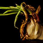 El corazon de la cebolla thumbnail