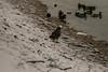 240A3979 (JoseFuko8) Tags: nieve fuentesauco zamora paisajes nevada invierno canon 7d mark ii pueblo campo