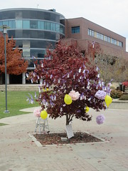 Tree of thanks (jamica1) Tags: tree campus ubc ubco bc university british columbia okanagan kelowna canada balloons ribbons