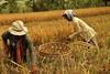 IMG_0474 (Kalina1966) Tags: bali island indonesia people rice field