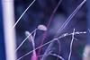 HFF!😏 (martinap.1) Tags: macro fence happyfencefriday bokeh light nikon d3300 105mm makro hff
