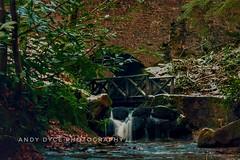 Maspie Den (ad12543) Tags: waterfall trees woodland walk fife scotland maspieden water