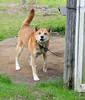 "Walk to Daihōji-005 (photozaki) Tags: ""dogs cats"" dog dogs inu cat cats neko shikoku japan ohenro88 ohenro pilgrimage"