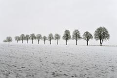 Sulzemoos (Pixelkids) Tags: schnee winter winterspaziergang winterlandschaft bäume bayern sulzemoos landschaft landschaftsaufnahme explored inexplore232 monochrome bw