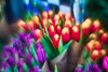 Lomo 50mm F1.2 Projector lens (michaelasss) Tags: lomo 50mm f12 projectorlens lomo50mmf12 adapted lenses tulips abstract flowers vintagelens vintage blurryart manual focus lens cine cineprojector lomo16kp dreamy velvet