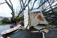 amsterdam  hendrik jonkerplein (hansfoto) Tags: amsterdam storm stormschade winter coderood boom ravage