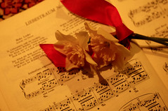 Happy Valentine's Day (Traveling with Simone) Tags: arthur rubinstein liszt liebestraum rêvedamour musique music daffodils yellow red rouge jaune jonquilles