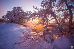 there she is (yves_matiegka) Tags: winter landscape sunrise scienic snow switzerland jura mountains naturparkthal