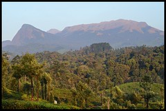 Evening View of Grass Hills (Indianature st2i) Tags: valparai anamalais anamallais anamalaitigerreserve westernghats tea shola rainforest nature indianature 2018 january february tamilnadu india life wildlife plantation forest people estate