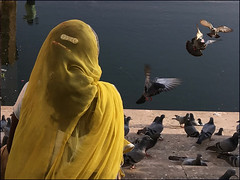 Pushkar (Christian Lagat) Tags: inde india rajasthan pushkar lac lake femme woman dos back jaune yellow oiseaux birds pigeons reflets reflection