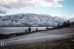Vineyards in winter (Jessie T*) Tags: vineyards kelownabc canada missionhill okanaganlake snowyhill sky landscape snow winter