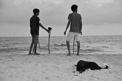 Sri_Lanka_17_253 (jjay69) Tags: srilanka ceylon asia indiansubcontinent tropical island tangalle beach tangallebeach tangalla blackandwhite blackwhite bw monochrome singlecolour nocolour colourless grey withoutcolour