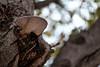 DSCF7238 (Evren Unal Photography) Tags: mushroom zeiss carlzeiss fujifilm touit2850m 50mm macro closeup sky tree mantar leafs green dof bokeh love alone depth field ngc art nature artnature deep outdoor