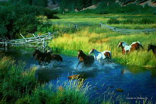 Digital Colored Pencil Drawing of Running Horses in Niarada by Charles W. Bailey, Jr.