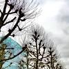 Private Show (bornschein) Tags: sky winter baum architektur glas museum kunstgebäude kunst stuttgart