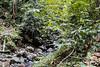 Rainforest St. Lucia (FOXTROT|ROMEO) Tags: rainforest regenwald wald bäume pflanzen trees blätter flus nature natur blume stein stlucia saintluciasaint lucia caribbean karibik travel reisen wandern