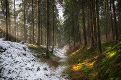 North vs South (der_peste) Tags: winter fall forestscape woods woodland forest trees snow autumnal raysoflight godrays sunrays sunlight colors