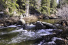 South Fork Rubicon River (trifeman) Tags: 2018 winter california january canon 7d canon7dmarkii eldoradocounty enf eldoradonationalforest usfs rubiconriver icehouseroad tokina tokina1116mm