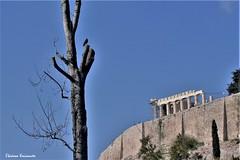 Historic center of Athens (Eleanna Kounoupa) Tags: ελλάδα αθήνα greece athens attica αττική ιστορικόκέντρο historiccitycenter hccity ακρόπολησπαρθενώνασ akropoli parthenon ουρανόσ μπλε πουλιά sky blue birds trees δέντρα