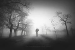 Nadie encuentra su camino... (niripla) Tags: byn blanco negro blackandwhite landscape composition valladolid spain camino fog