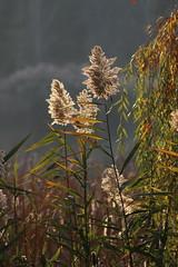 IMG_2763 (stevefenech) Tags: canada ontario stephen steve fenech fennock