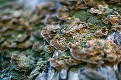 (Casey Lombardo) Tags: film filmphotography filmgrain filmscans kodak kodakfilm kodakgold expired expiredfilm minoltasrt101 longbeach longbeachca fungus fungi gold 100