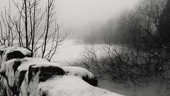 Frozen (_J @BRX) Tags: longwood huddersfield kirklees yorkshire england uk march 2018 colnevalley winter nikon d5100 snow blackandwhite bw landscape field fence white mist fog path tree reservoir yorkshirewaterreservoir