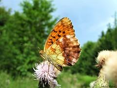 Butterfly 1572 (+1000000 views!) Tags: butterfly borboleta farfalla mariposa papillon schmetterling فراشة