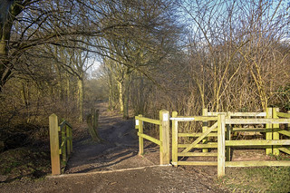 Walk into Heartwood Forest