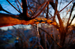 R0340769 (bcostin) Tags: backyard branches ice sunset tree trees wintercold
