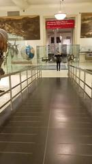 American Museum of Natural History Night in the museum (juan tan kwon) Tags: anightatthemueseum amnh americanmuseumofnaturalhistory hackathon brigheup base planetarium haydenplanetarium wheelchair whale video kubrik dinosaur