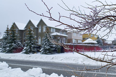 Freezing Rain (AncasterZ) Tags: winter snow freeze om24mmf28 street