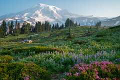 Surely this is paradise! (Laura Jacobsen) Tags: hiking mtrainier mtrainiernationalpark mttahoma nationalparks paradise rainier wildfire wildflowers