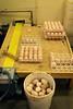 EggInspection (Minnesota Board of Animal Health) Tags: egg inspect look turkey poultry portrait