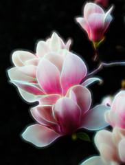 Pink (1seeu) Tags: closeup flora glow art