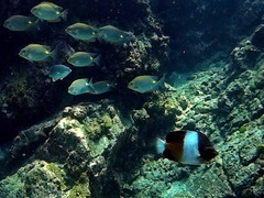 Fish (markb120) Tags: fish animal seawaterunderwatercolar diving scuba underwater